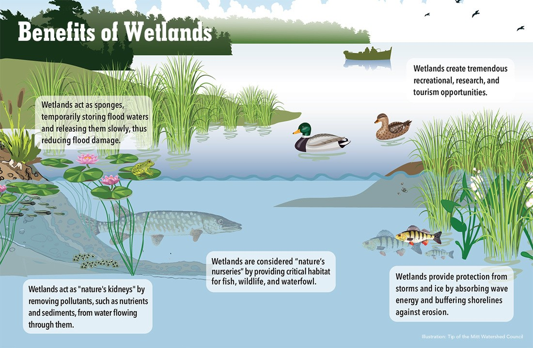 the role and benefits of the wetland ecosystem