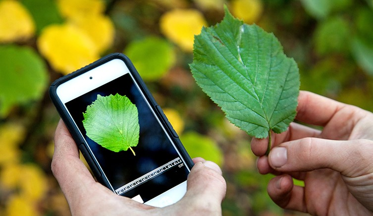 leaf-snap