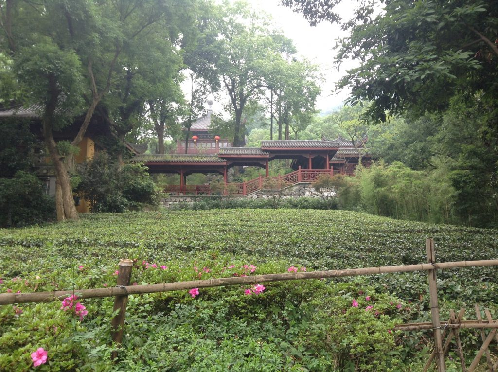 Tea fields and temples