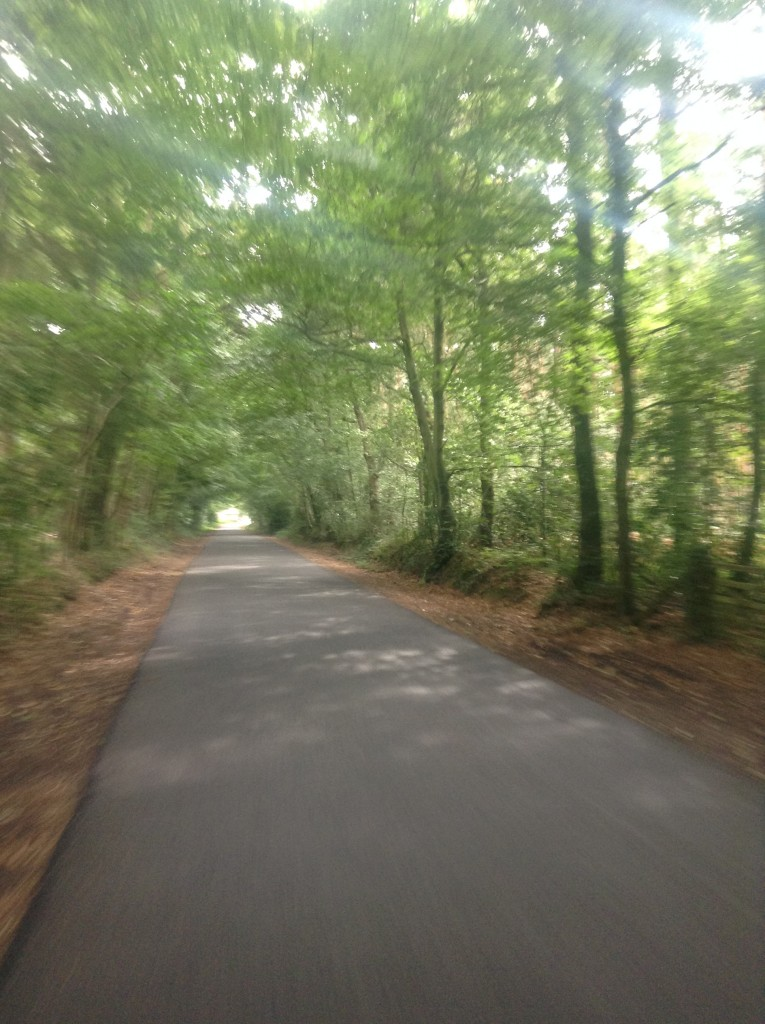 Exploring roads in the New Forest National Park